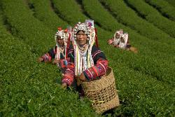 Vietnam Culture Travel Private Day Tours