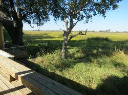 View of the Okovango Delta and plains from our compound at Vumbura Plains Camp