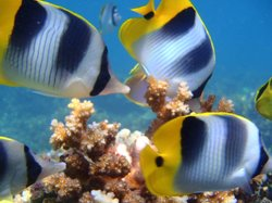 Reef Safari Fiji - Scuba Diving Day Trips