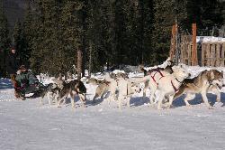 Sirius Sled Dogs & Aurora Tours