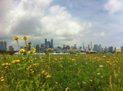 Northerly Island