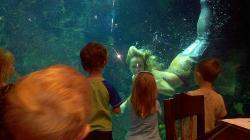 Mermaid show in the restaurant