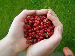 Food Sightseeing Estonia Day Tours