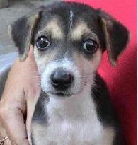 Goa Animal Welfare Trust