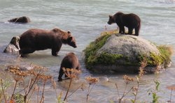 Alaska Nature Tours
