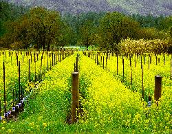 Jarrar Tours - Wine Country Tours