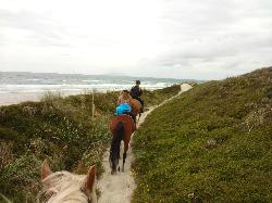 ‪Pakiri Beach Horse Rides - Day Tours‬