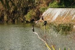 Aves descanzando después del baño