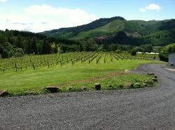 Shafer Vineyard Cellars