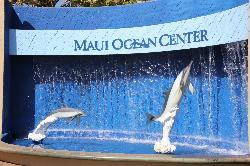 Ocean Activities Center