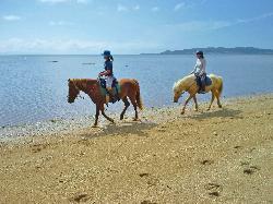 Horse Riding Spot Naminma