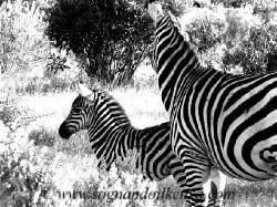 Sognando il Kenya - Day Tours