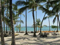 Palms / Beach