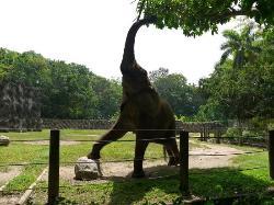 Elefante Mundi @ Zoologico de Mayaguez