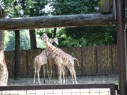 The Kiev Zoo