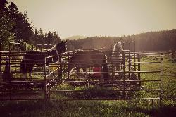 Our horses in the overnight corrals
