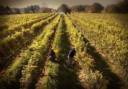 Peconic Bay Winery