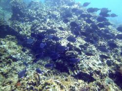 Underwater views