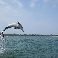 Panama City Beach Dolphin Tours & More