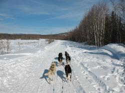 Sun Dog Express Dog Sled Tours - Day Tours
