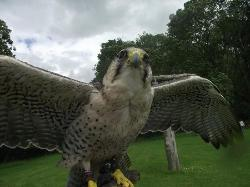 The Rutland Falconry and Owl Centre