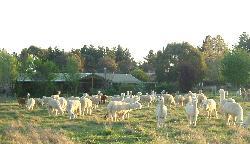 Glenhope Alpacas B&B Accommodation Armidale