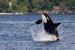 San Juan Island Whale & Wildlife Tours