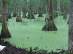 Louisiana State Arboretum