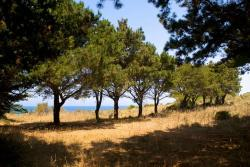 Foresta Nisos