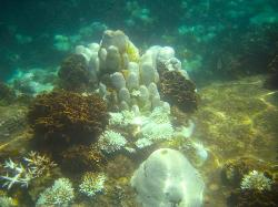 Stunning Coral Shapes