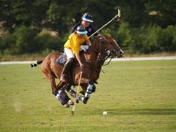 Polo Wicklow