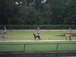 Ebro Greyhound Park