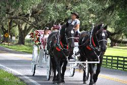 Horse Country Carriage Co & Tours