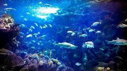 フロリダ水族館