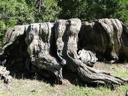 Big Stump Basin