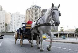 White Horse & Carriage Company - Private Tours