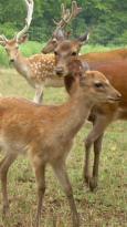 Amicalola Deer Park