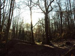 RSPB Reserve Blean Woods
