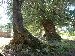 gli alberi più suggestivi