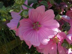 spot this flower