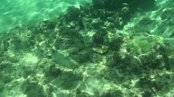 目の前の海