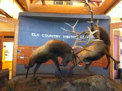 ‪Rocky Mountain Elk Foundation‬