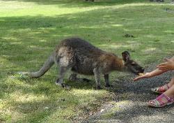 Le Jardin des Kangourous