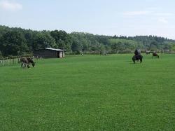 Rays Farm