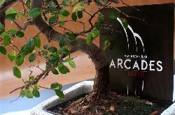 Arcades 80055