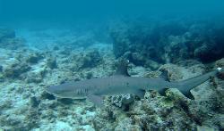 Reef Encounters浮淺