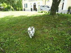 Friendly rabbit in the grounds