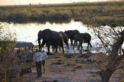 "Elephants and ""Sundowners"" -- Linyanti Bush Camp"