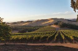 Starr Ranch Vineyard & Winery