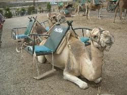La Casa del Camello